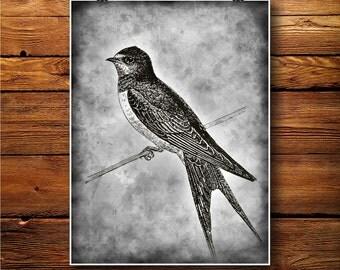 Swallow Print, Vintage Art Decor, Martlet Illustration  BW394