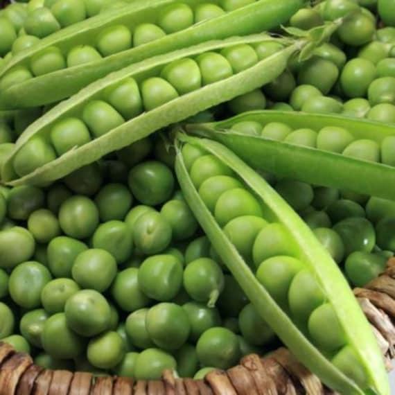 Pea seeds Vegetable miracle  Heirloom Vegetable Seeds - 50 seeds