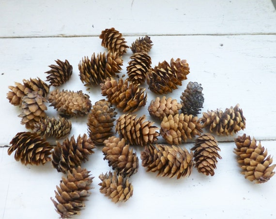pine cones for crafts pine cones for sale tiny pine cones