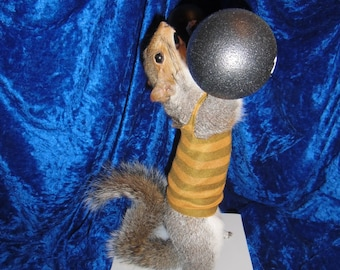 Strong man squirrel
