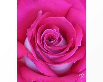 "Pink Wall Decor of a Bright Pink Rose, PINK HOME DECOR, Pink Art Print, Pink Wall Art, Pink Flower Photograph, Pink Rose ""Pink Twist"""