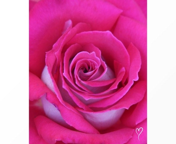 """Pink Wall Decor of a Bright Pink Rose, PINK HOME DECOR, Pink Art Print, Pink Wall Art, Pink Flower Photograph, Pink Rose """"Pink Twist"""""""