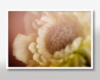 PASTEL DAISY PRINT, Artificial Daisy, Macro Shot Print, Wall Art Print, Fine Art Photo, Interior Design, Pastel Colors, Living Room Decor