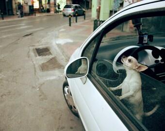 Street photography, rain, dog, car, lonely, white, urban, cry.