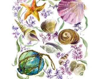 "seashell art, seashell painting, watercolor seashell, nautical art print, seashell print, watercolor nautical, giclee print, size 11"" x 14"""