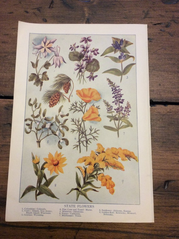 Antique Print, Botanical, State Flowers, Book Plate, Lithograph (B018)
