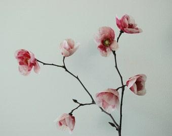 Paper Magnolia Bloom Flower