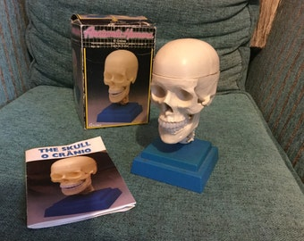Human anatomy. The skull. Demountable and articulated. Scale 1:2