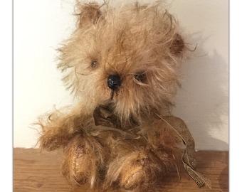 Artist  Bear. A little yorkshire Terrier Dog