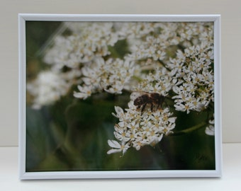 Wasp on flowers: Framed photo