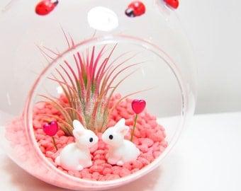Valentine's Day Honey Bunny Air Plant Terrarium