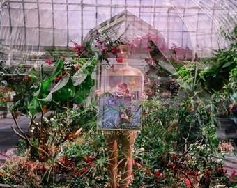 Greenhouse #1-10 x 10