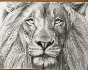 A3 Lion Drawing