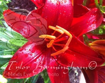 Red Lily | Lily | Instant Digital Download