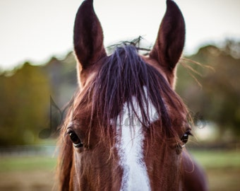 Brown Horse Picture | Horse Picture | Horse Photography | Horse Wall Art | Equine Photo | Equine Art | Animal Art | Rustic Wall Decor