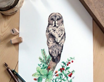 Print - OWL Lapone, Huckleberry and tree branches
