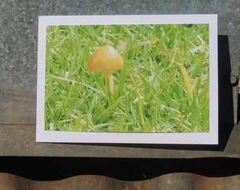 Little Yellow Toadstool (photo card)