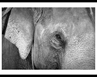 Thailand Series - Black and White Elephant