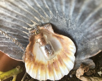 Assorted Shell in a Bottle Necklace