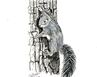 Squirrel on tree original drawing