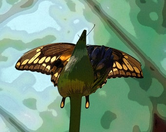 Butterfly on Flower 2 (version 2), Child's Photo, 5x7 Photo, 8x10 Photo, 11x14 Photo
