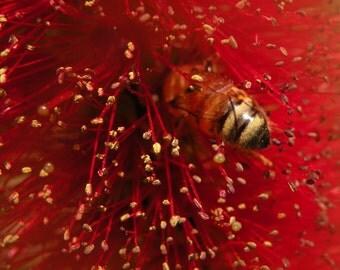 Feeding Bee Photograph Wall Art