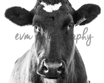 Black and White Cow, Art, Fineart, Photography, Farm, Cattle, Dairy, Farmhouse