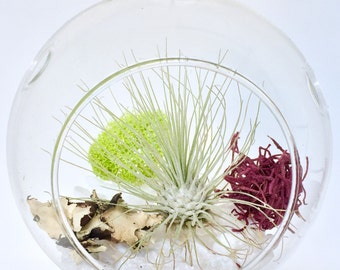 Air Plant Globe Terrariums (Kit Option Available)