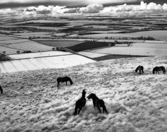 Infrared Black and White Photography, Ponies Traprain Law, Scotland