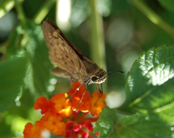 G31 - Tiny Perched Butterfly