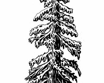 Coastal Redwood Pen&Ink Illustration - Print
