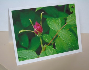 The Red Rosebud Blank Note Cards 2016-00149