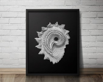 Seashell Printable Art, Nautical Art, Coastal Decor, Black and White, Vintage Wall Art, Haeckel, Minimalist, Beach, Instant Download