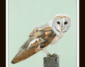 British Wildlife Print - Barn Owl
