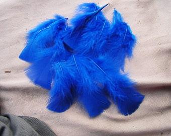 Terrific Turkey plumage, cobalt blue, craft feather, bulk wholesale lot, costume supply