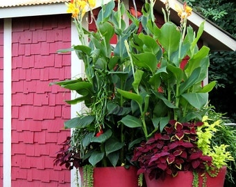 Red flower house- Print your own wall art