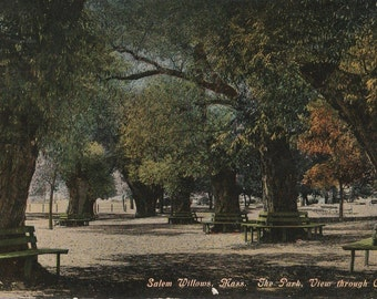 Vintage 1910s Postcard Salem Willows Massachusetts Park Hand Colored Beautiful Old Card Divided Back Era Postmarked