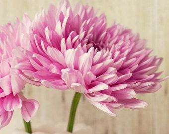 rustic white home decor, large living room art, flower photography, pink home decor, still life art, chrysanthemums, pink mums