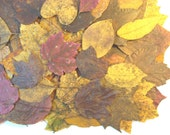 Fall Leaves Dried, 100 Real Pressed Leaves Gold Red Brown Orange, Fall Wedding Table Decoration, Thanksgiving Decor, Autumn Crafts Scrapbook