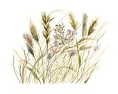 Grasses - print of original watercolor