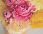Flower Photography, Ranunculus, Pink, Yellow, Modern Home Decor, Bright, Cheerful, Shabby, Nature Photo, Square Photograph, Fine Art Print