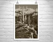 Desert Cactus, Arizona Art, Desert Photography, Western Art, Saguaro Cacti, Sonoran Desert, Vertical Art, Tucson, Catalina Mountains