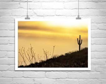Sonoran Desert Picture, Tucson Photo, Arizona Desert Art, Cactus Art, Sunset Print, Cacti, Silhouette Art, Saguaro, Fine Art Print