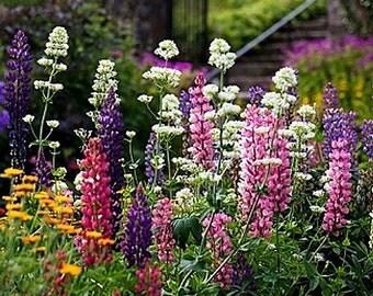 Organic Snapdragon Tetra Mix Heirloom Flower Seeds