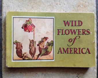 1932 Wild Flowers of America Book by Whitman
