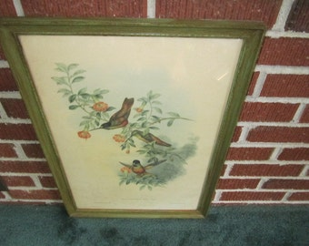 Vintage Large Framed Floral Print of Lovely Hummingbirds