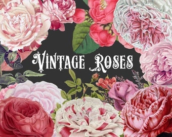 50% OFF SALE! Vintage Pink Roses, Clipart and Photoshop Brushes