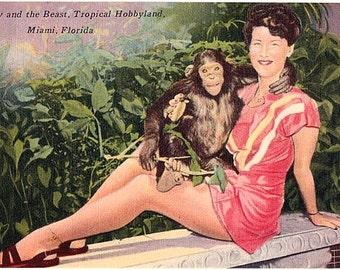Vintage Florida Postcard - A Pin Up and a Chimpanzee at Tropical Hobbyland, Miami (Unused)