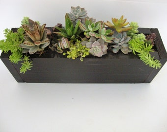 Narrow Succulent Garden - Mount or Sit - Handmade Natural, Recyled & Dark Stained Wood Box Planter - Select Your Garden