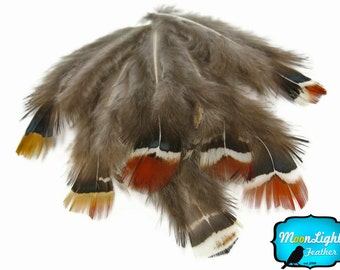 1 Pack - MIX Lady Amherst Pheasant Plumage feathers 0.10 oz. : 718